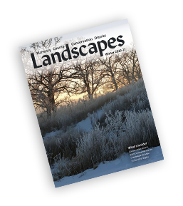 2020-winter_landscapes_Cover